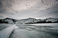 A flock of geese fly over an icey Yellowstone River
