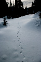 Small animal tracks
