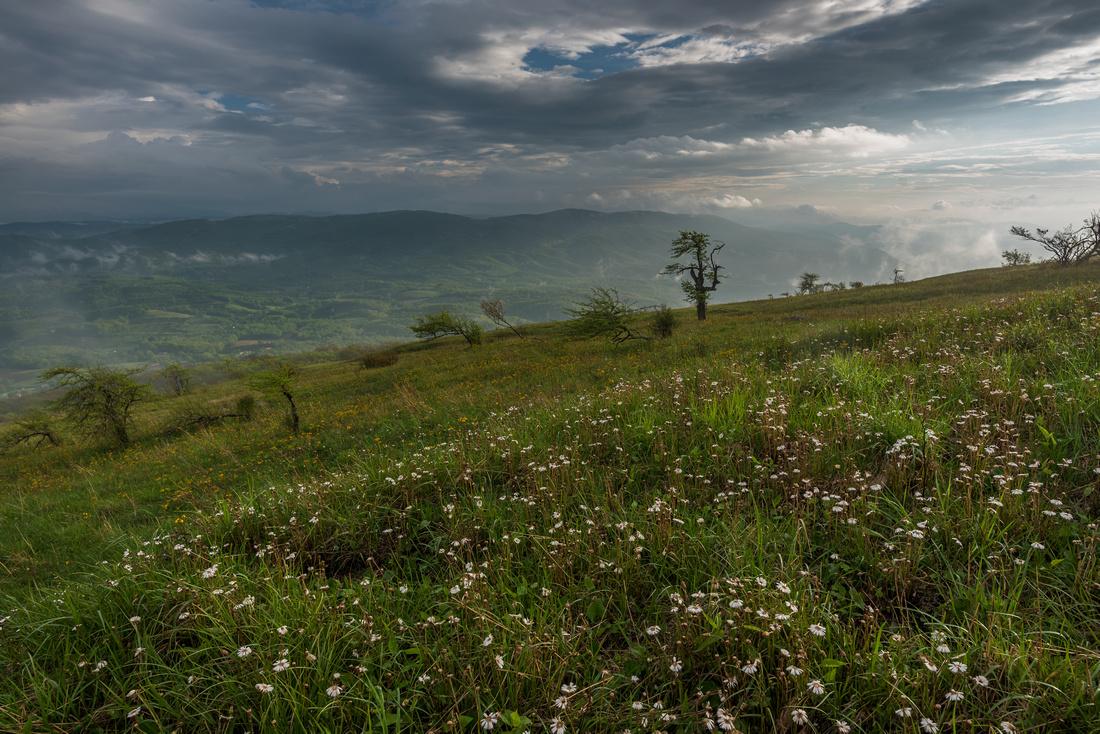 Whitetop Mountain Virginia