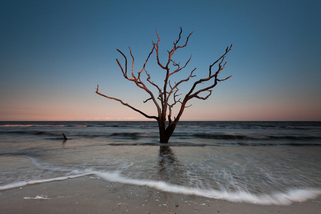 Tree On Boneyard Beach Lit Up By Sunset Edisto