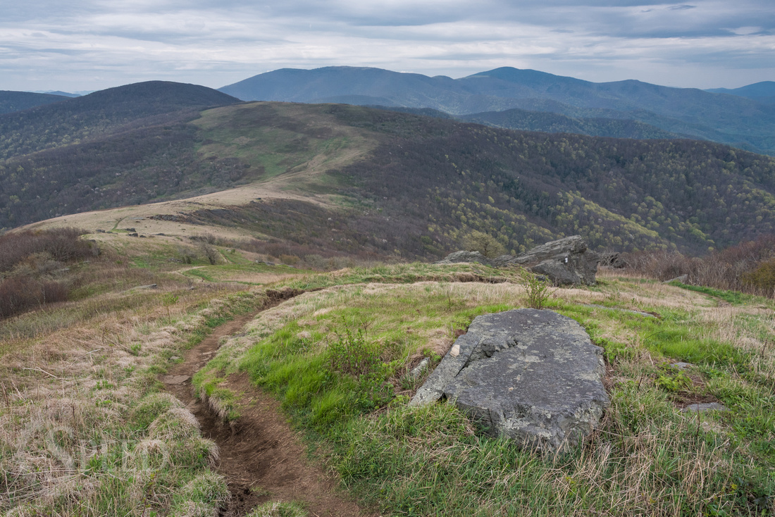 Roan Mountain Section of Appalachian Trail