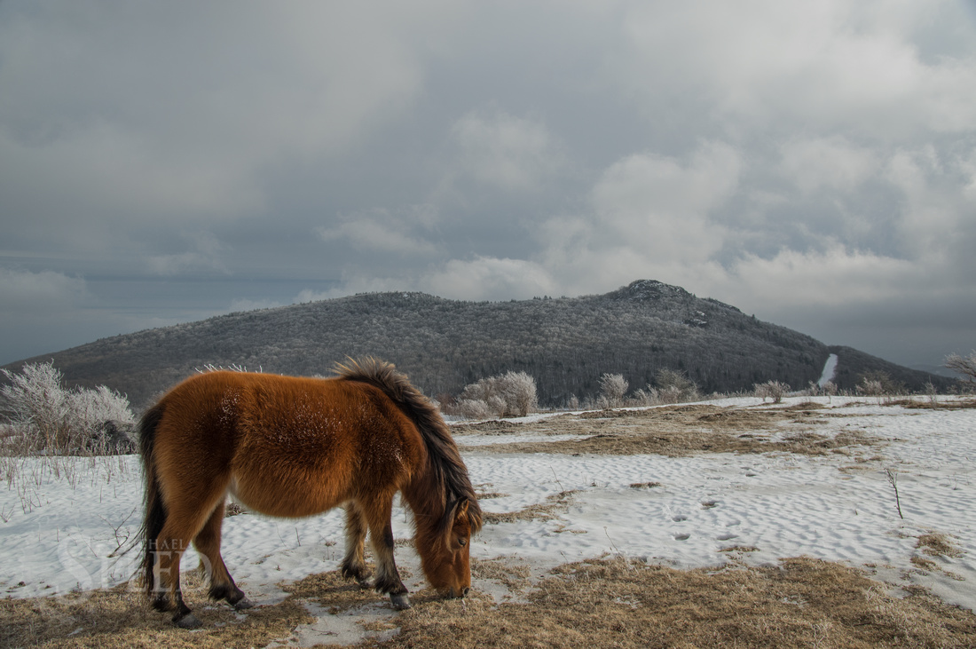 Wild Ponies Grayson Highlands