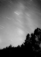 Star trails over pine trees.